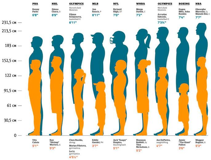 мужской половой член размеры Чаплыгин